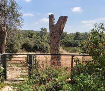 עיצוב וילה מודרנית בהרי ירושליים, נוף הגפנים שנשקף מויטרינת הסלון, ענבל קרקו עיצוב פנים ופנג שואי